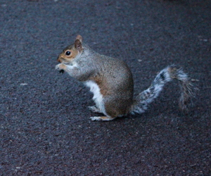 animal, cute, and Hyde Park image