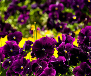 colorful, contrast, and flowers image