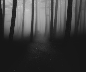 black, dark, and forest image