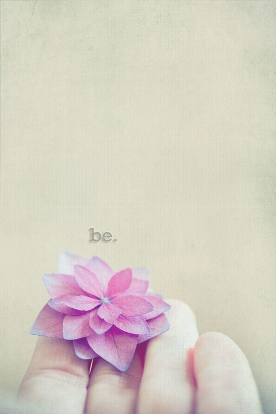 flower, be, and book image