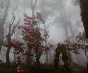 flowers, tree, and forest image