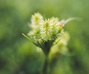 lensbaby, sweet35, and jeanettesphotography image