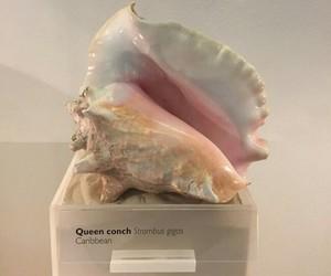 carribean queen image