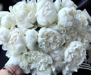 flowers, white flowers, and love image