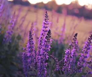 calm, flowers, and lavender image