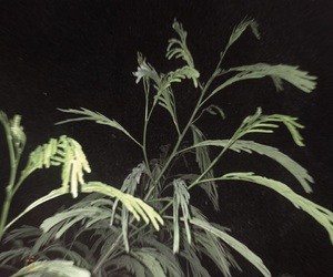 green, night, and plant image