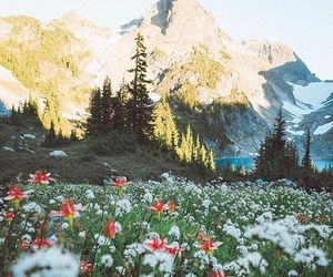 nature and flowers image
