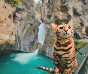 cat, adventure, and waterfall image