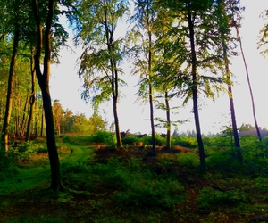 Baltic Sea, evening, and forrest image