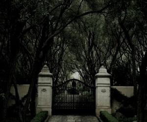 green, tree, and gate image