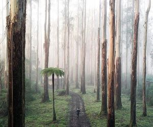 adventure, amazing, and forest image