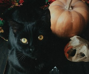 cat, pumpkin, and autumn image