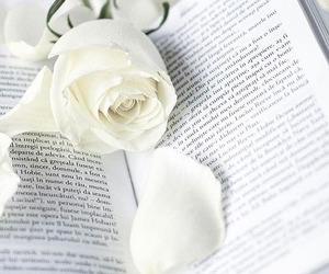 roses, beautiful, and bridal image
