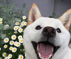 animals, happy, and smile image
