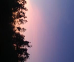 blue, trees, and tumbrl image