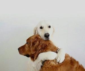 animal, animals, and dog image