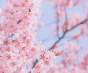 background, pink, and tree image
