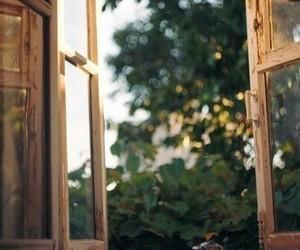 vintage, window, and tree image