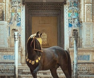 horse, animal, and arabic image