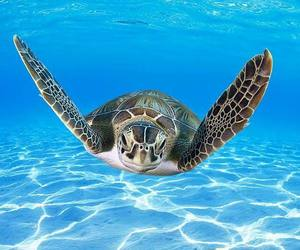 ocean, turtle, and sealife image