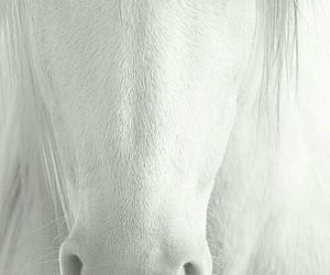 animals, sweet, and beautiful image