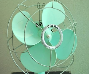 fan and mint image