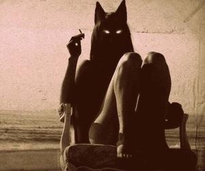 cat, cigarette, and dark image