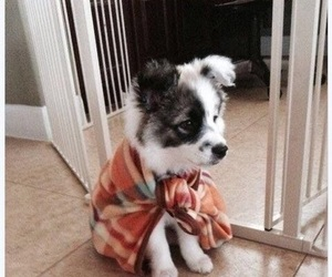 adorable, animals, and awww image