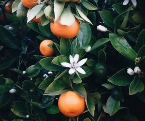 orange, flowers, and nature image