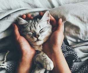 adorable, baby, and cat image