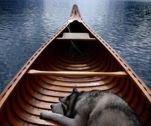 dog, boat, and travel image