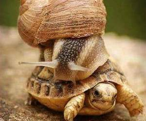 fast, funny, and snail image