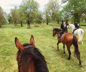 country life, country living, and equestrian image