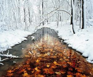 autumn, leaf, and winter image