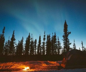 camping, trees, and fire image