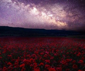 flowers, stars, and sky image