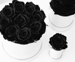 beautiful, black, and roses image