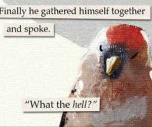 bird, quote, and birb image