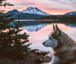 adventure, dogs, and puppys image