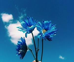 beautiful, blue, and flores image
