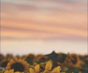 background, sunflower, and fave image