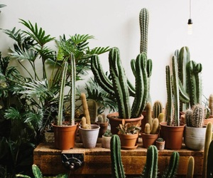 cactus, feed, and plants image