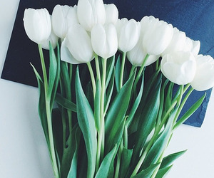 aesthetics, white, and flowers image