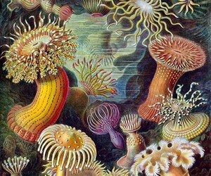 anemones, sea, and beautiful image