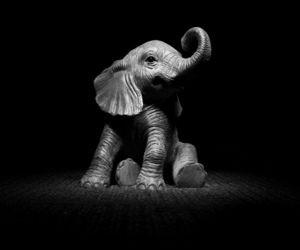 awesome, b & w, and baby elephant image