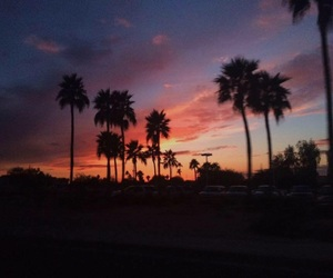 palm trees and sunsets image