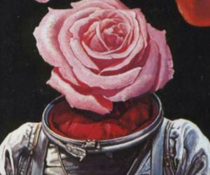 rose, tumblr, and wallpaper image