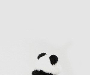 panda, black, and wallpaper image