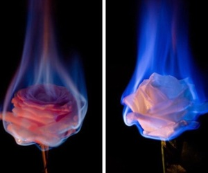 fire, rose, and tumblr image