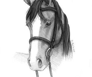 animal, horse, and my art image